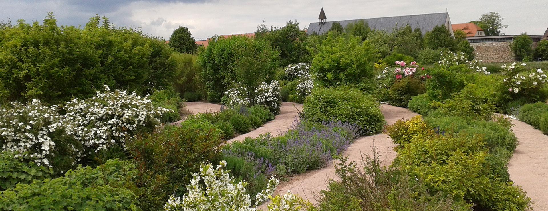 Impressionen vom Labyrinth: blühende Hecken säumen die Wege